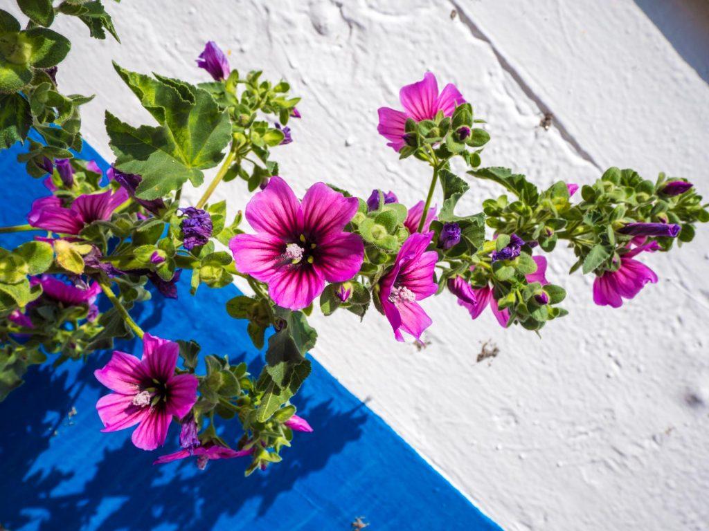 Fleurs de Nerja