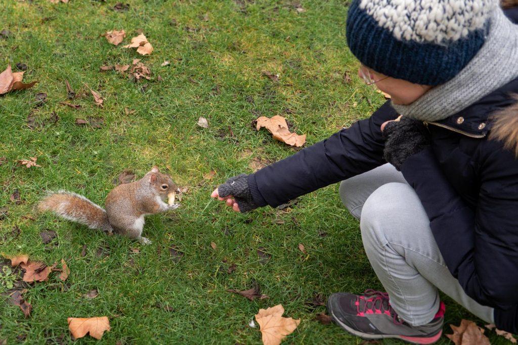Le même écureuil
