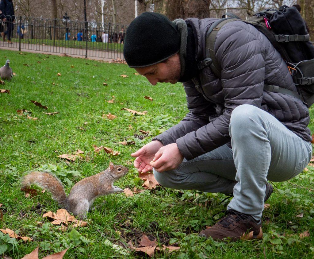 Un écureuil surbooké à Saint James Park